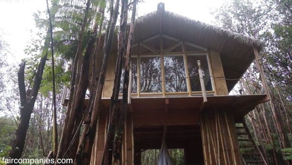 Woman Builds 230SF Cabin In Hawaii In 2 Months For 11k