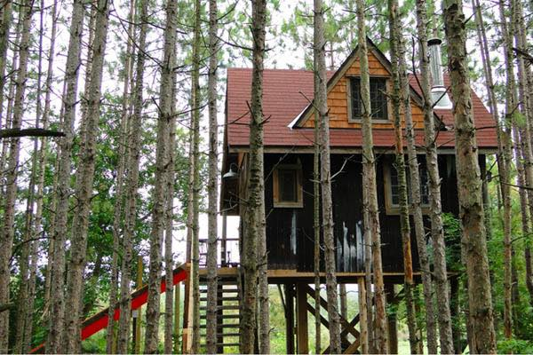 lynn-knowltons-tiny-tree-fort-cabin-002
