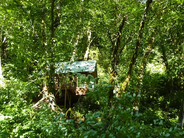 Tiny Cabin in the Wilderness
