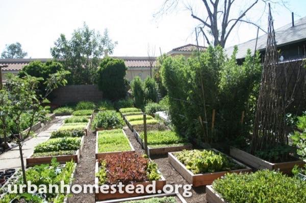 urban-homestead-family-in-la-tiny-organic-farm-003