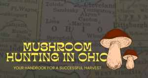 mushroom hunting in Ohio