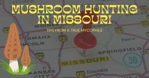 Mushroom hunting in Missouri