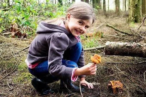 mushroom hunting in Michigan