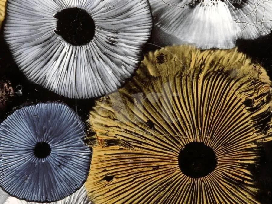 mushroom spore art
