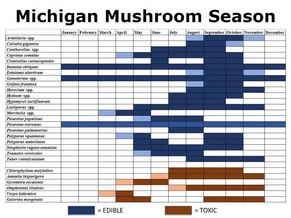 Michigan mushroom hunting season