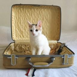 Saying Goodbye to the Yellow Suitcase