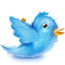 twitter bird cute fluffy