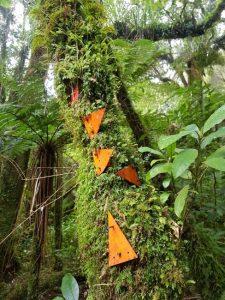 Te Araroa Day 7 - Ratea Forest