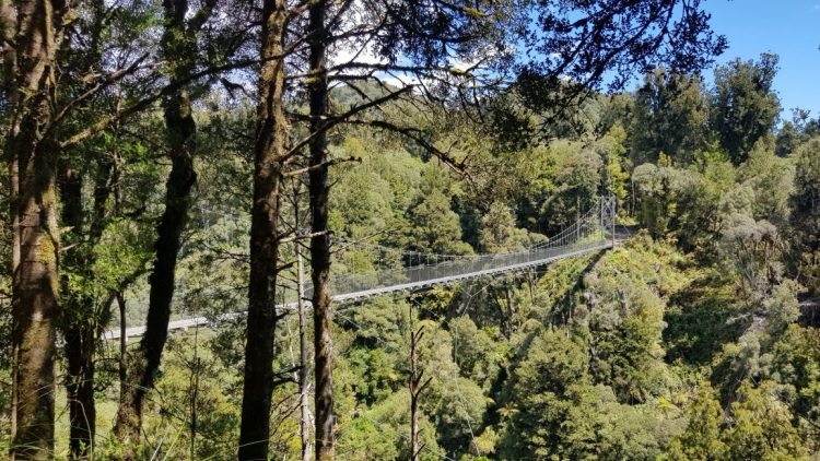 Te Araroa Trail Day 41 - One of many suspension bridges on the Timber Trail