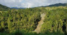 Te Araroa Trail Day 51 - Towards Whakahoro
