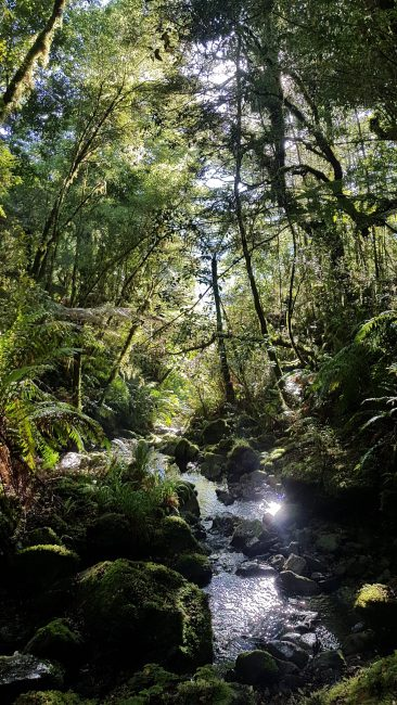 Te Araroa Trail Day 65 - Before I took the wrong turn