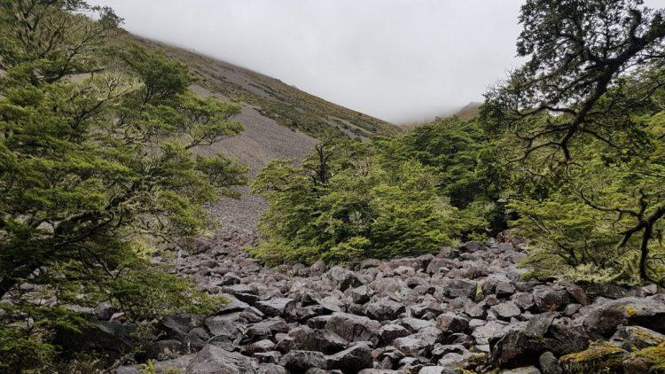 Te Araroa Trail Day 91 - The bushline above Lake Ohau