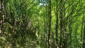 Te Araroa Trail Day 100 - Coming into Arrowtown
