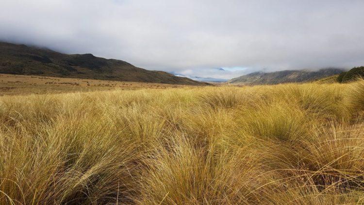 Te Araroa Trail Day 105 - Tussock