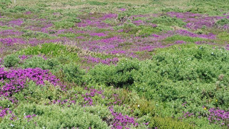 Beautiful heathlands