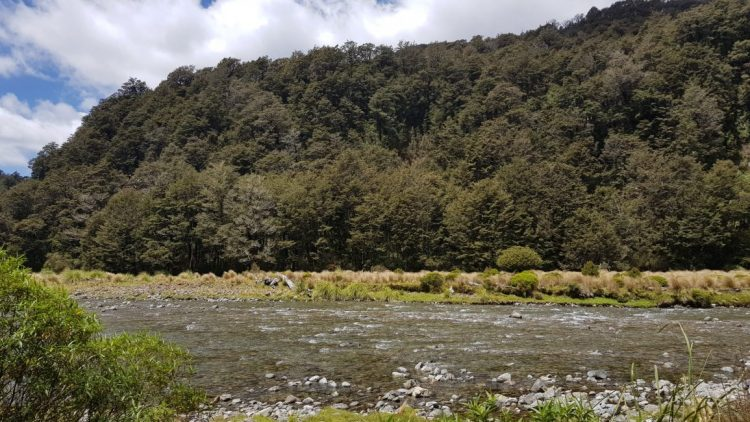 First crossing on the Waipakihi river