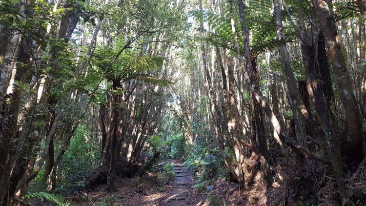 Mangorei Track