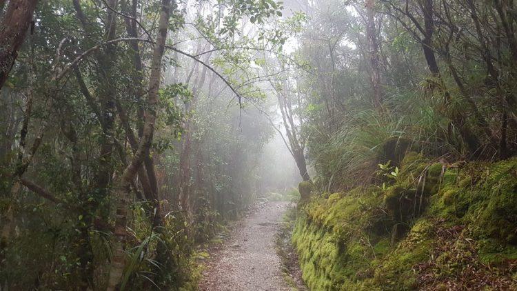 Misty forest near James Mackay hut - Heaphy Track