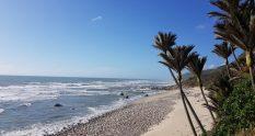 beach Heaphy Katipo