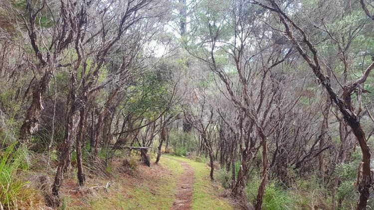 Lydia Bay Track