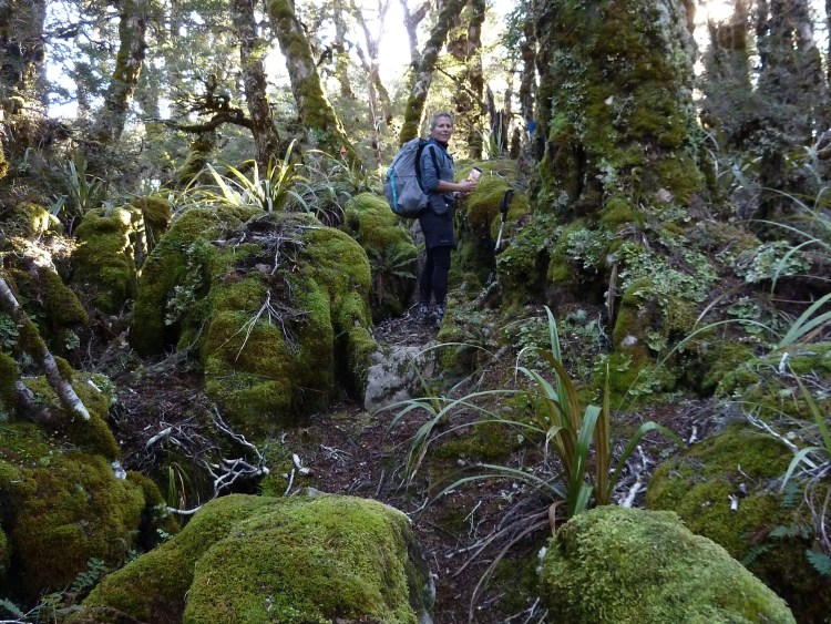 Through the goblin forest from Gordons Pyramid to Salisbury hut Tinytramper