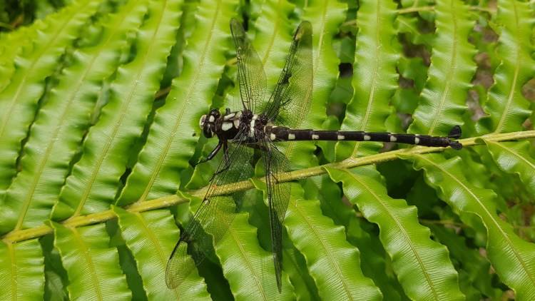 A dragonfly stops to pose for us