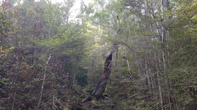 Through the forest back to Holyoake Shelter