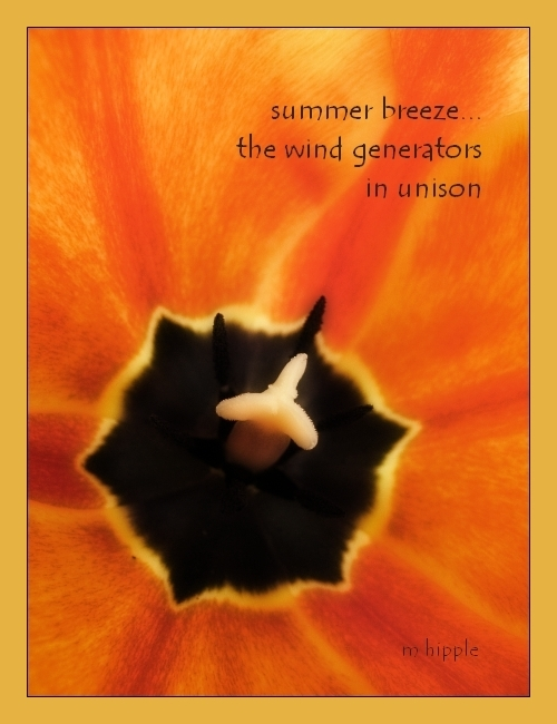 photo of a tulip with haiku text superimposed