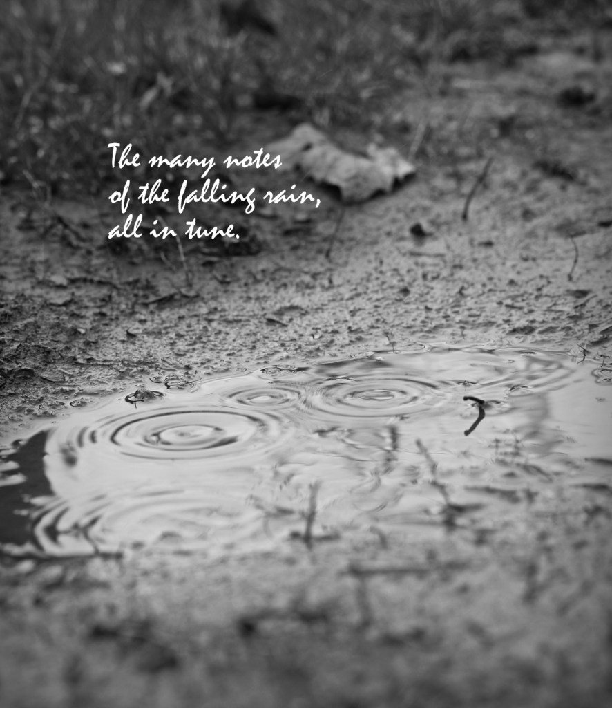 The many notes/of the falling rain/all in tune.  (haiga)