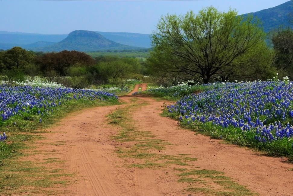 Photo of a dirt road with bluebonnets alongside it