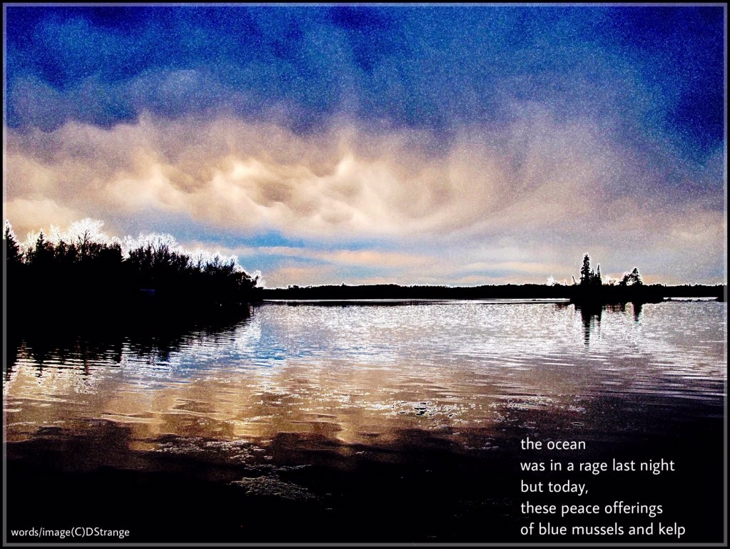 stylized photo of a calm sea with distant bushes and a darkening evening sky reflecting in the calm water