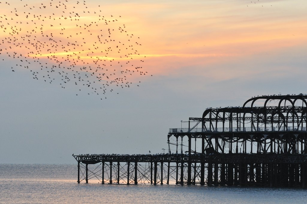 Photograph by James Offer of Starling murmurations over the burnt-out West Pier in Brighton.