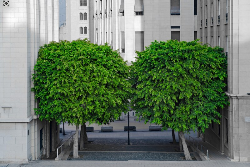 photograph of two green trees in a narrow space between two grey buildings