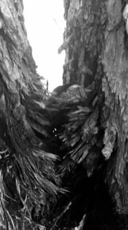 Photograph on tree bark