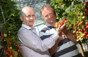 Irish Fresh Fruit Industry Valued at €38M