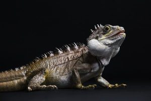 Dublin Zoo To Host Reptile Weekend At Zoorassic World