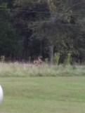 Large deer near Aunt L.'s office.