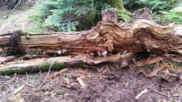 A decaying log that I found strangely beautiful.