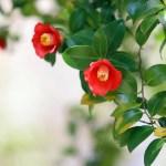庭木の手入れを業者へ依頼する場合の費用や注意点について解説