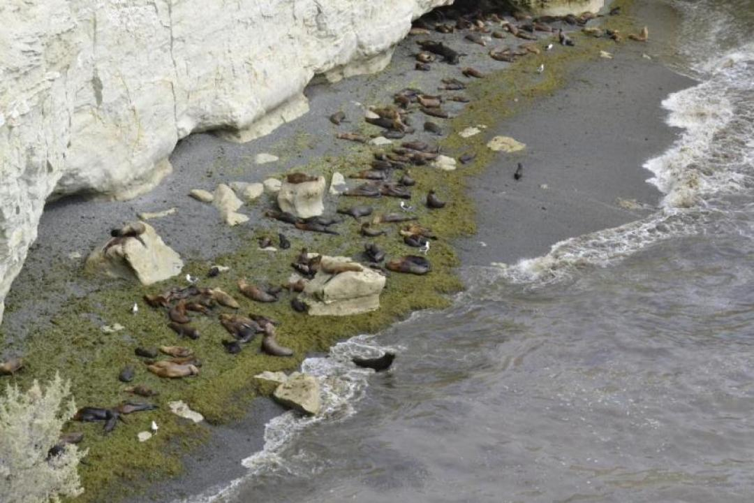 La loberia di Punta Lomo a Puerto Madryn da vicino