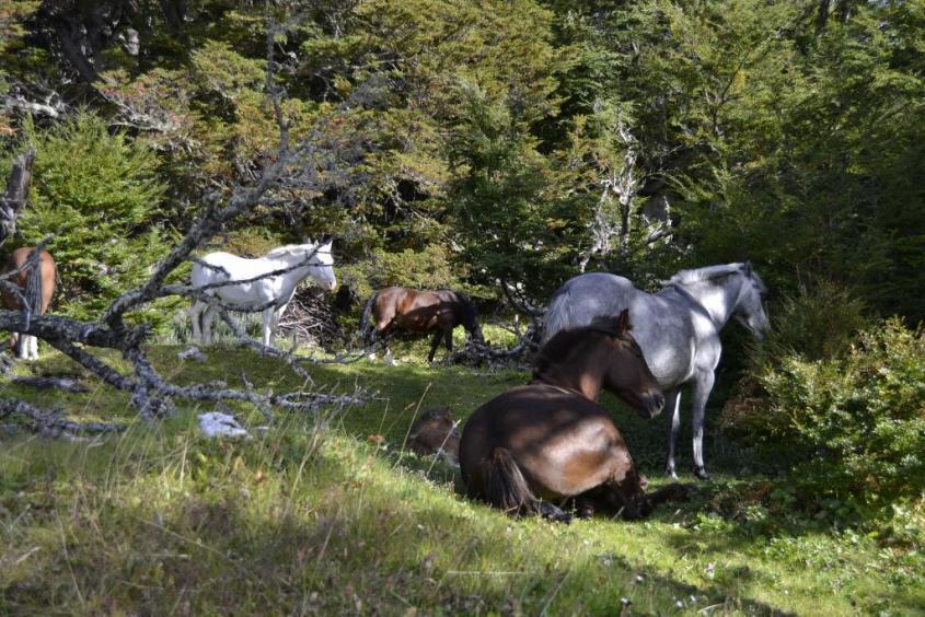 Cavalli al Parco Nazionale Tierra del Fuego ad Ushuaia El Fin del Mundo