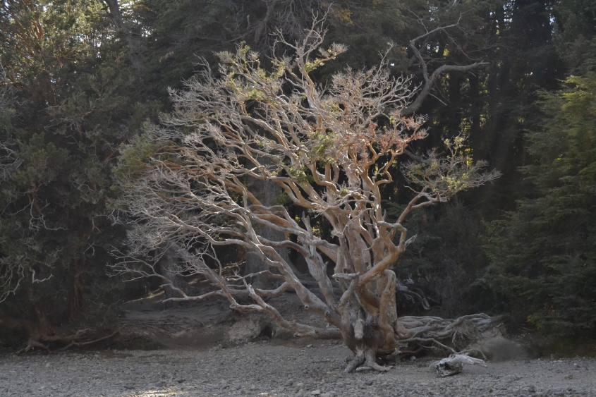 Spiaggia Villa Tacul sul Circuito Chico di San Carlos de Bariloche