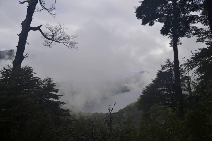 Parque Huerquehu sentiero Los Lagos a Pucon in Cile
