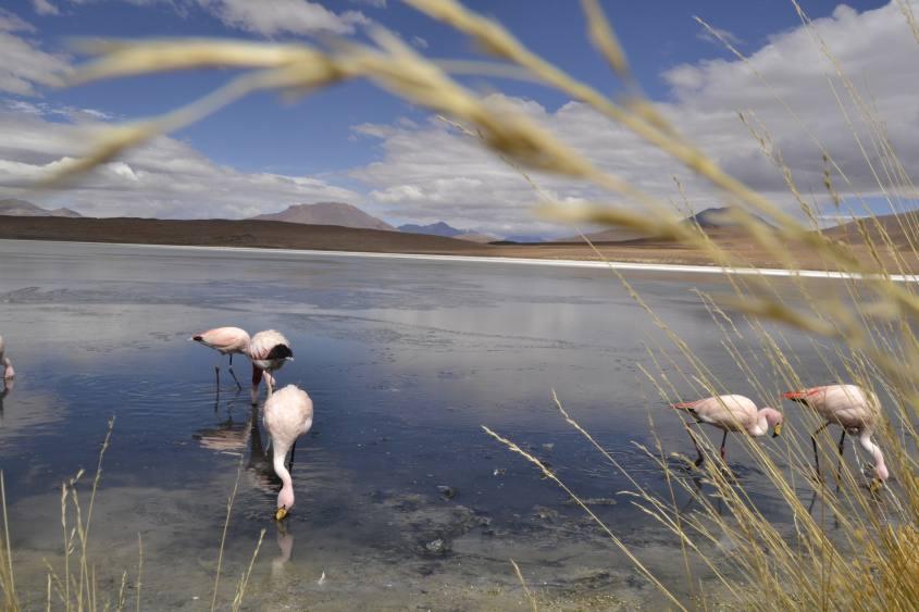 Laguna Colorada e fenicotteri durante il tour al Salar di Uyuni in Bolivia