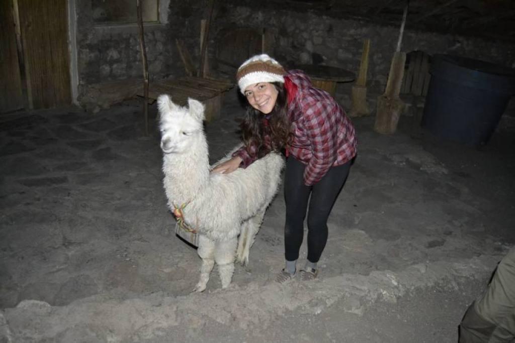 Fiammetta e l'alpaca