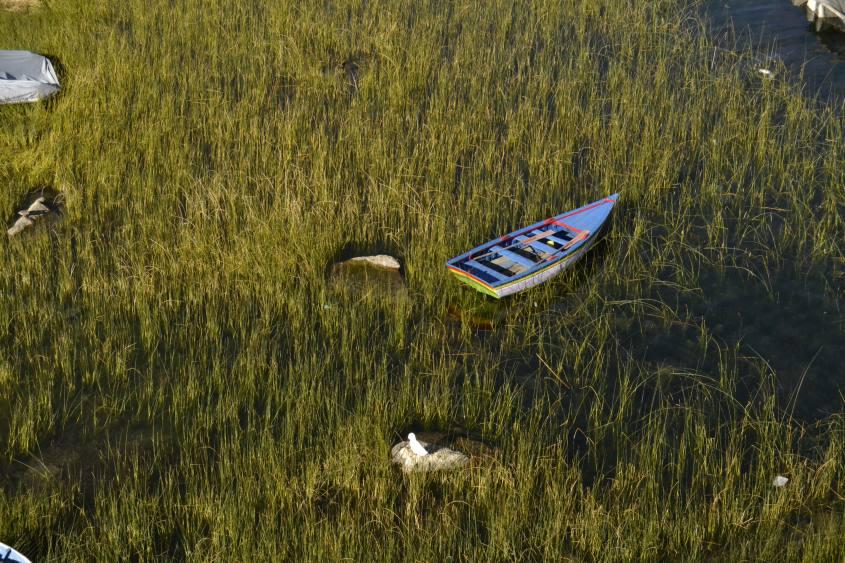 Barca e vegetazione dal Mirador del Inca al Lago Titicaca in Bolivia