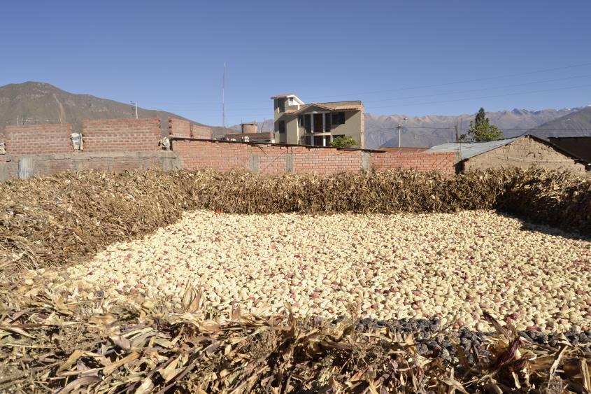 Pannocchie di mais ad essiccare al sole nella Valle del Colca in Perù
