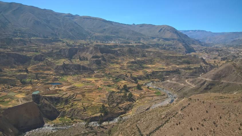 Vista sui terrazzamenti agricoli a 4000 metri all'interno del Canyon del Colca in Perù