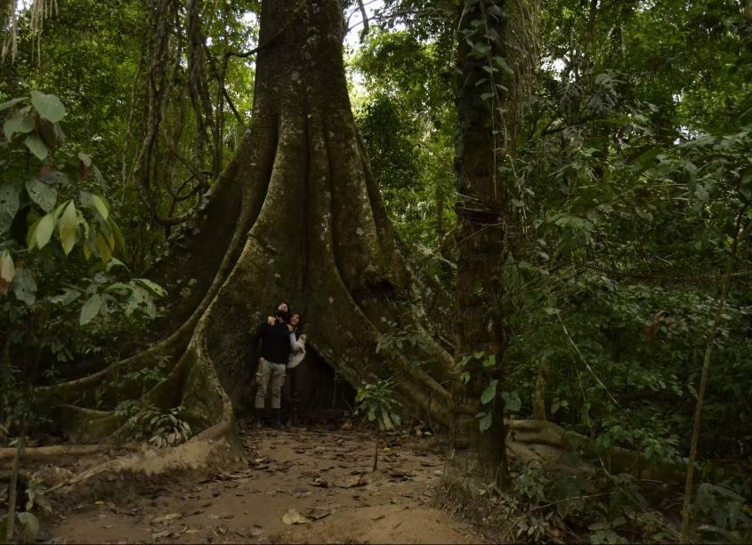 Alberi secolari all'interno della Riserva Tambopata nella Foresta Amazzonica in Perù