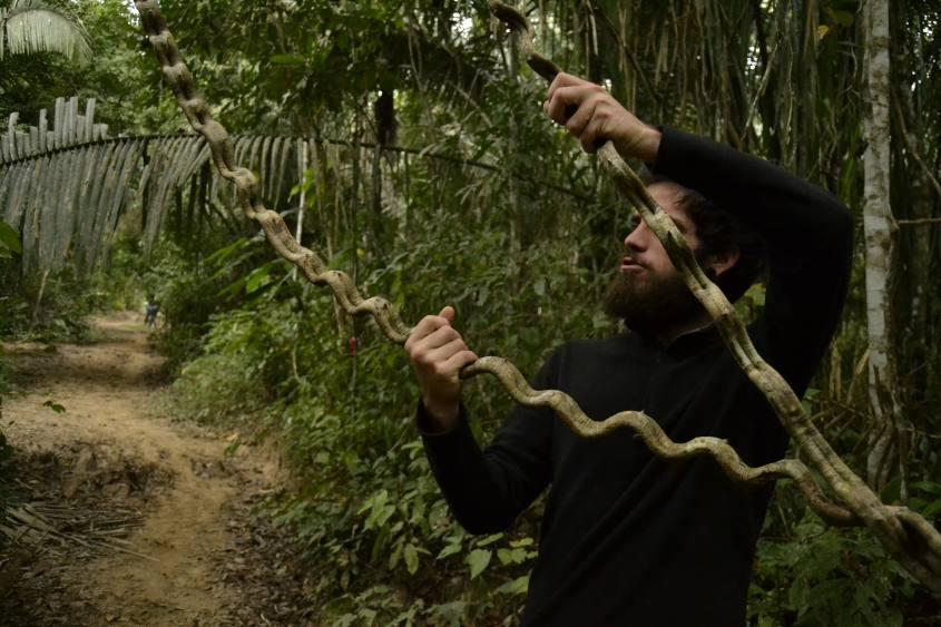 Strane liane all'interno della Riserva Tambopata nella Foresta Amazzonica in Perù